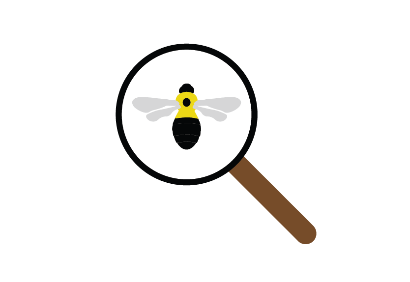 Icon of bumble bee under magnifying glass